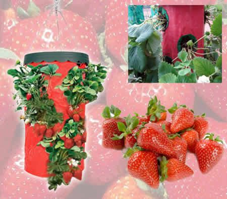 Hanging Strawberry Planter Upside Down Plant Fixture - SP-01