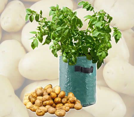 Patio Potato Tub Planter Pot   Grow Organic Vegetables