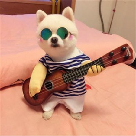 Pet Funny costume playing guitar Size M