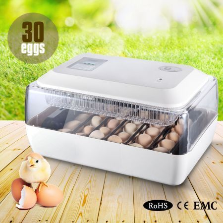 Auto-Turning Egg Incubator