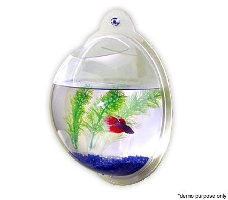 Fish tank wall mounted 30cm crazy sales for Acrylic fish bowl