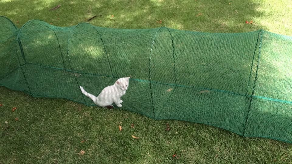 Cat Crazy about Outdoor Tunnel!!